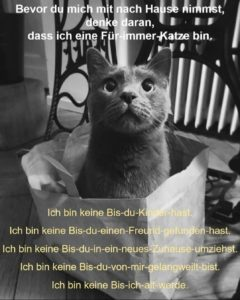 Für-immer-Katze